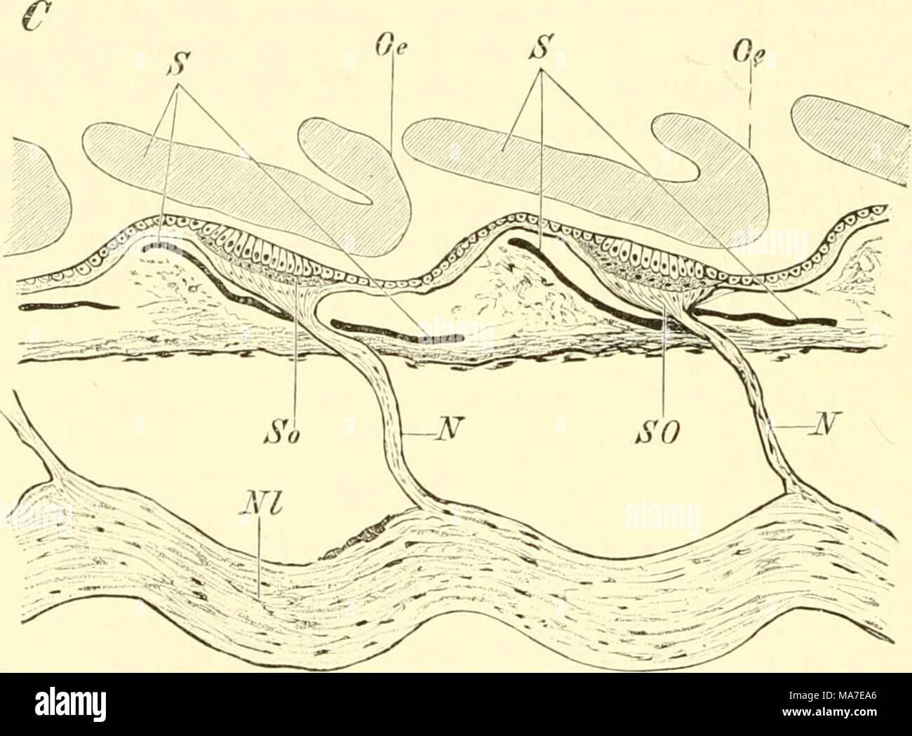 Erfreut Grays Anatomie Kanal 1 Ideen - Menschliche Anatomie Bilder ...