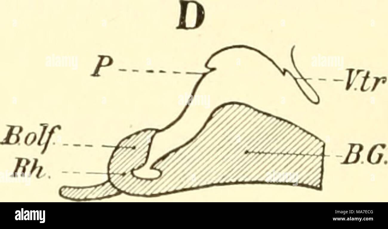 Gemütlich Vergleichende Anatomie Definition Galerie - Anatomie Ideen ...