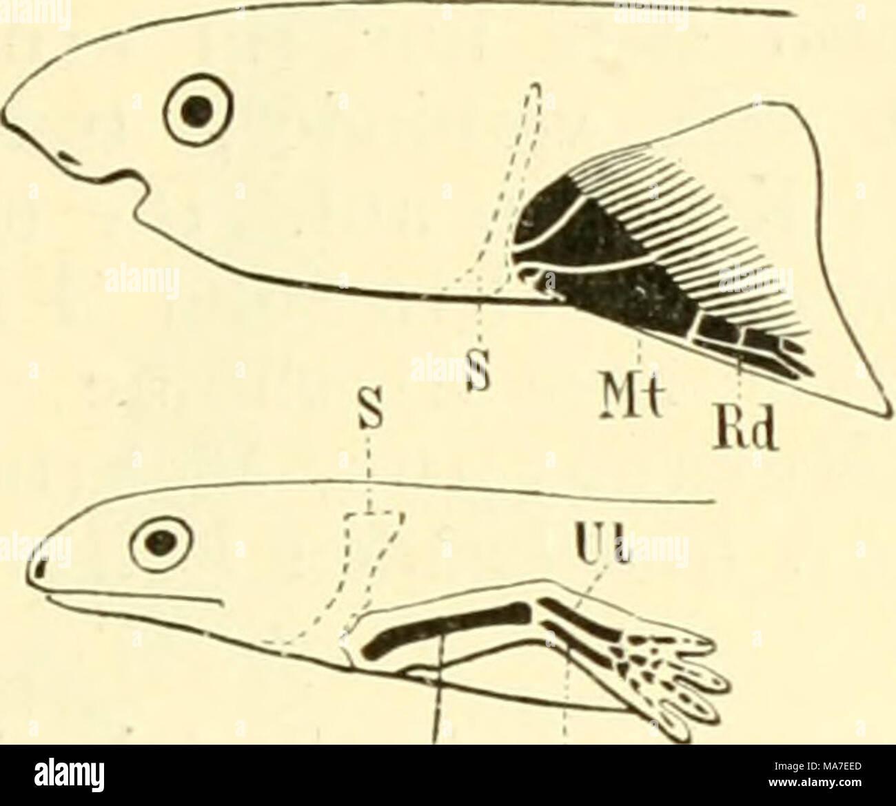 Tolle Sigma Anatomie Galerie - Menschliche Anatomie Bilder ...