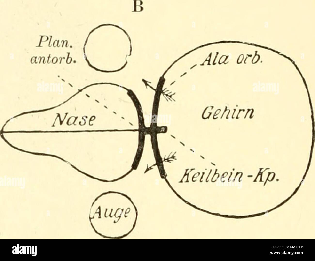 Niedlich Studium Knochen Für Anatomie Galerie - Menschliche Anatomie ...