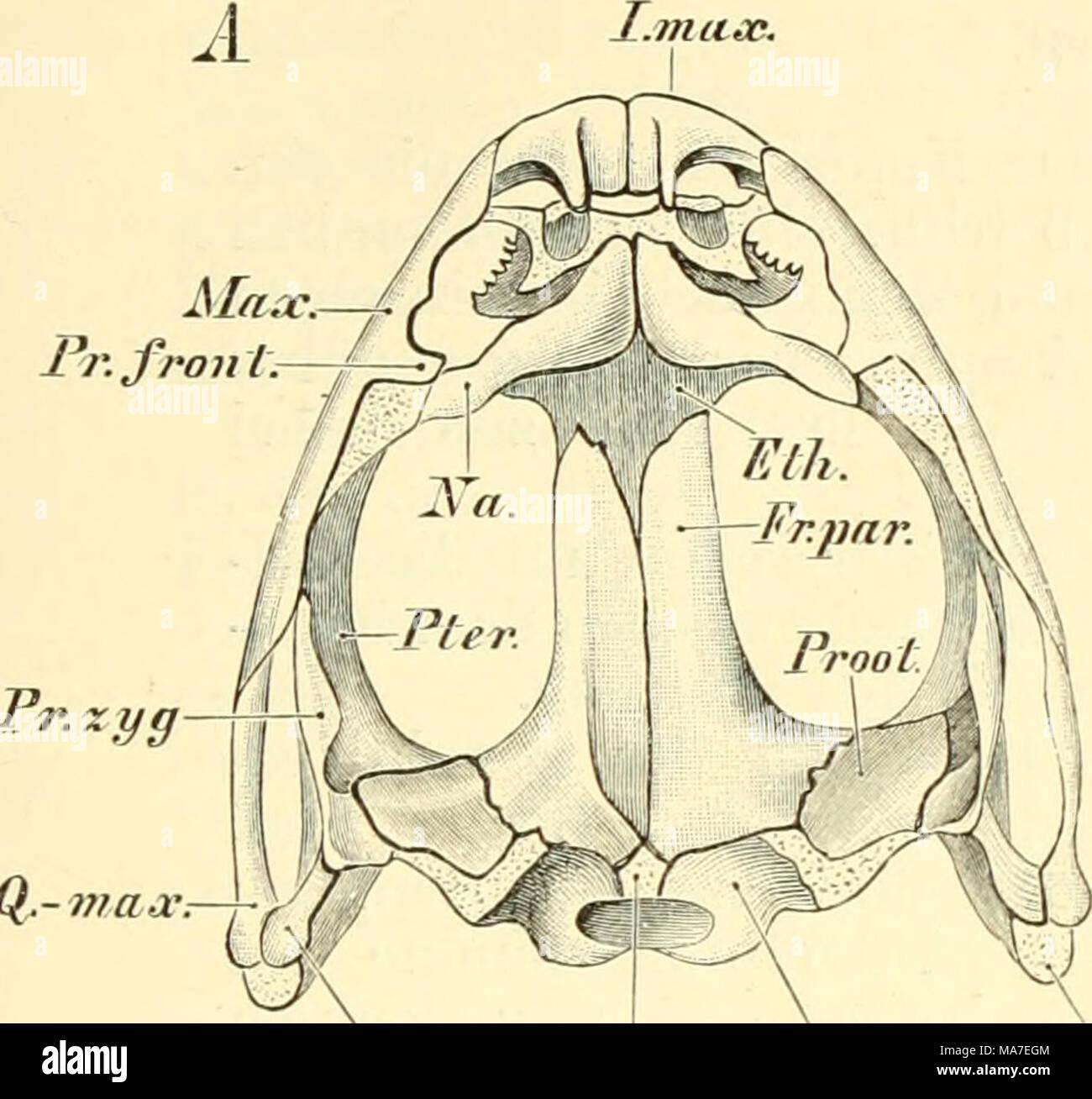 Berühmt Vergleichende Anatomie Der Herzstruktur Bilder - Anatomie ...
