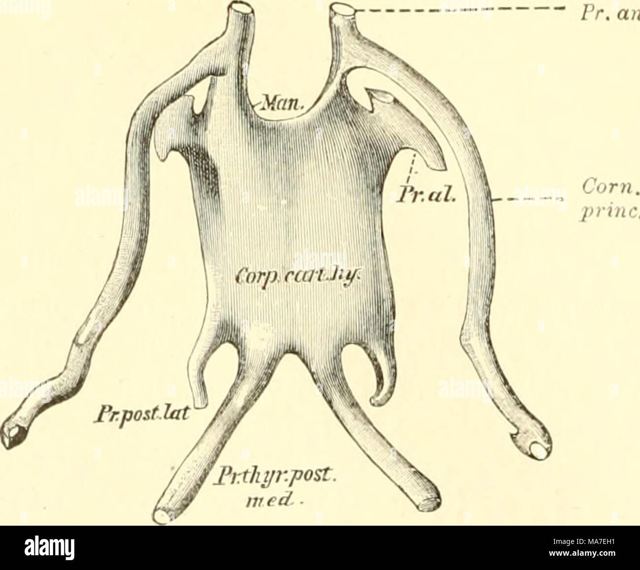 Ungewöhnlich Warum Studieren Wir Anatomie Und Physiologie Ideen ...