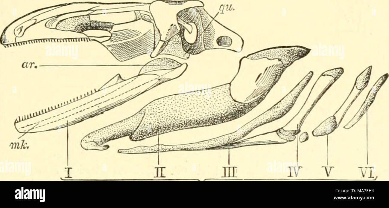 Ziemlich Vergleichende Anatomie Und Evolution Bilder - Anatomie Von ...