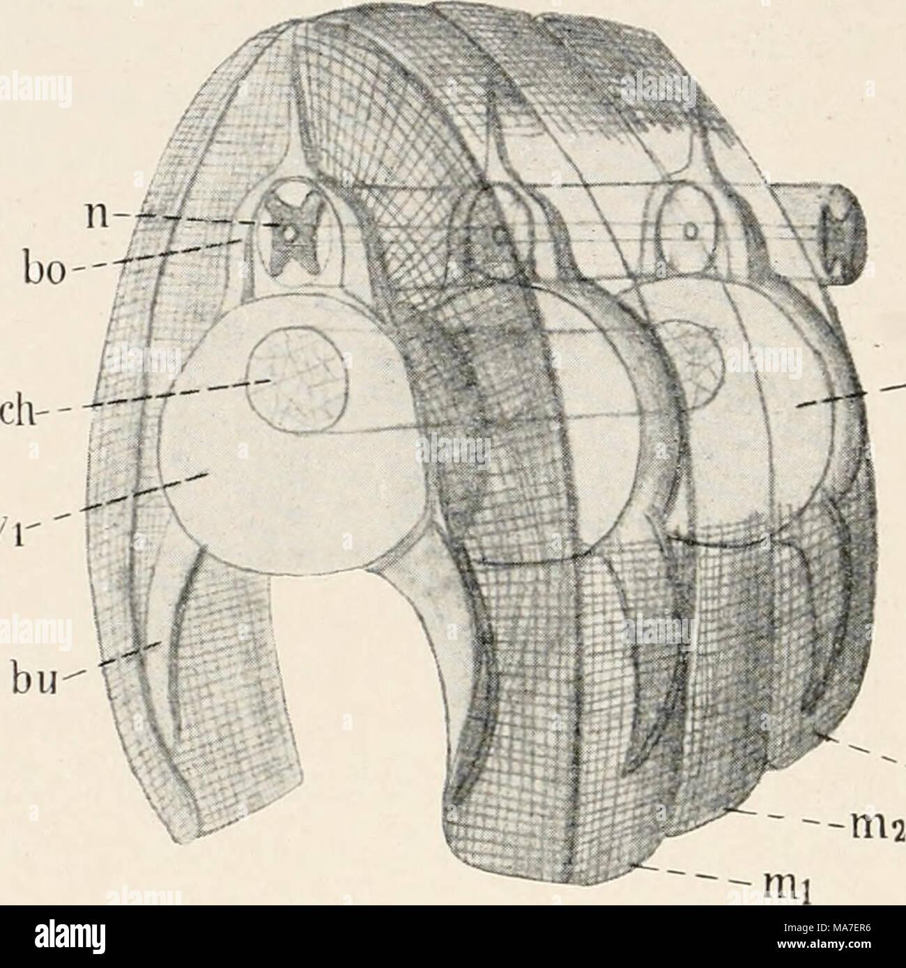 Berühmt Zeichnen Sie Das Schematische Diagramm Bilder ...