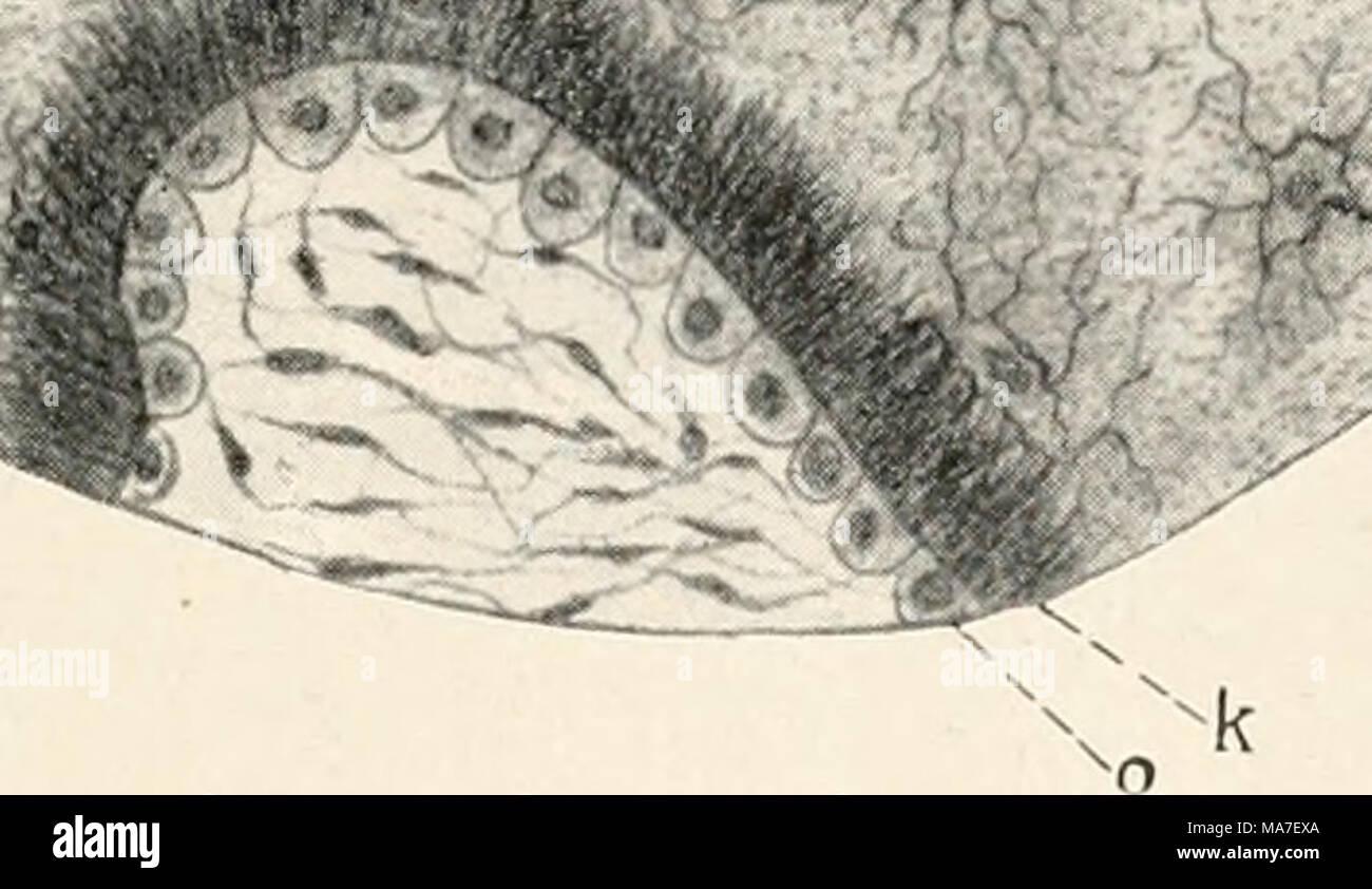 Atemberaubend Blut Anatomie Und Physiologie Quizlet Bilder ...