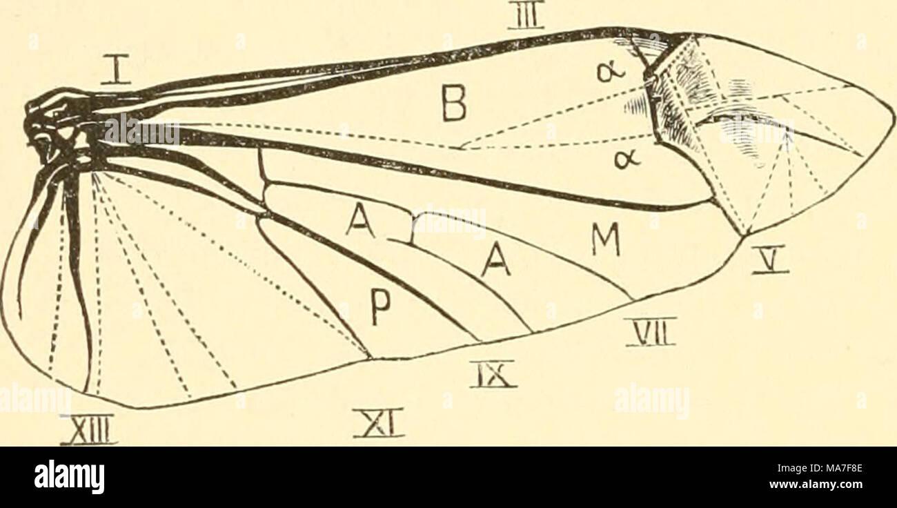 Beste Diagramm Der Kniemuskulatur Ideen - Menschliche Anatomie ...