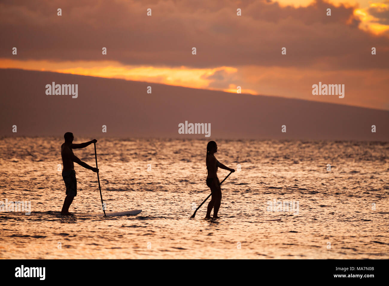 A fit male and female on stand up paddle boards enjoy a gorgeous sunset with the island of Lanai in the background off Maui, Hawaii, USA. - Stock Image