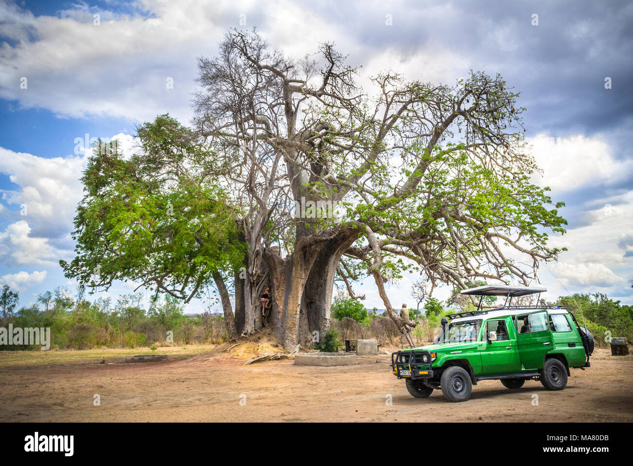 SAFARI TANZANIA, RUAHA, MIKUMI, AFRICA NATURE AND LANSCAPE WITH DANGEROUS ANIMALS - Stock Image