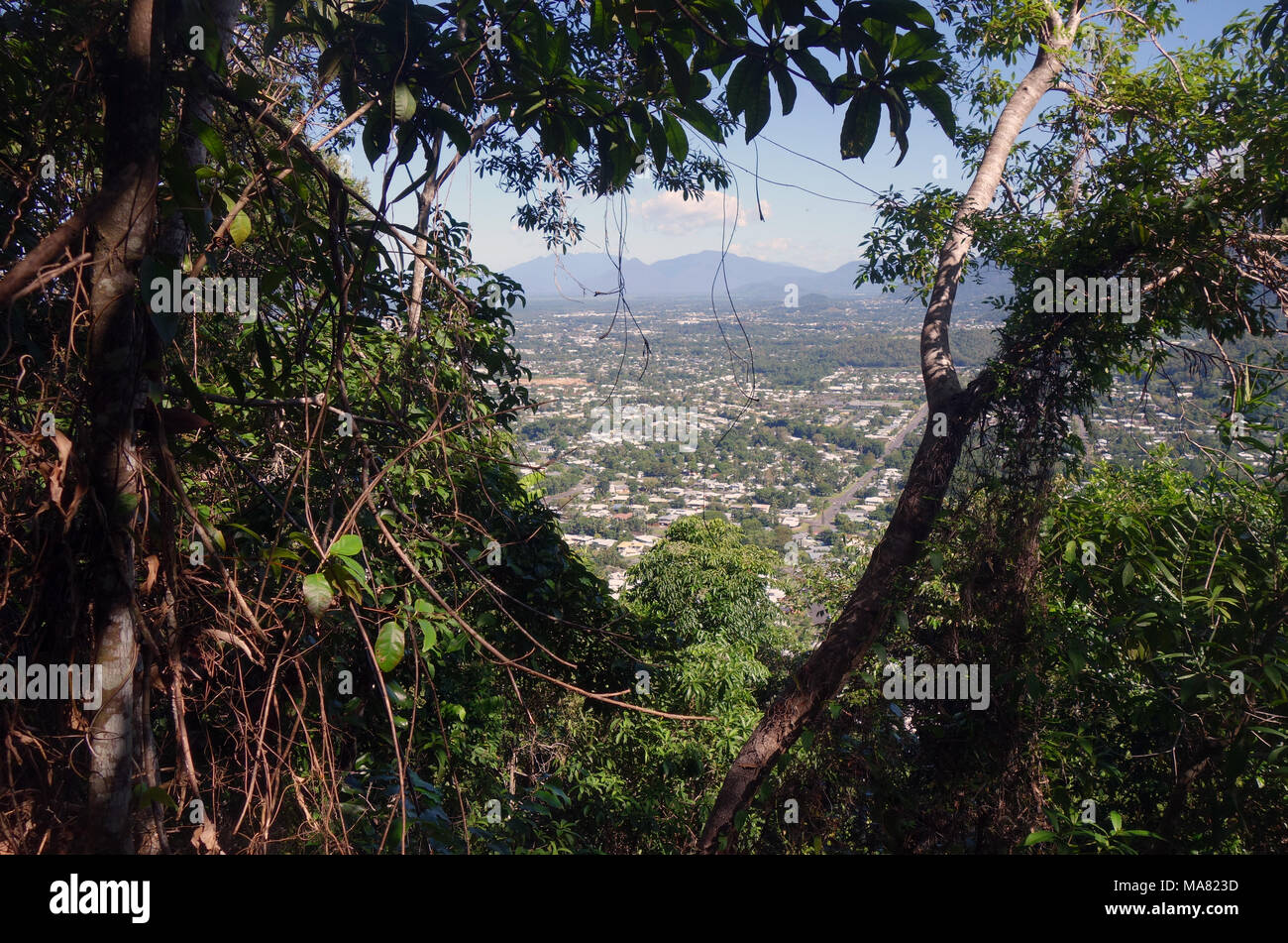 Glimpses of Cairns suburbs through rainforest along Green Arrow walking track, Mt Whitfield, Cairns, Queensland, Australia. No PR - Stock Image
