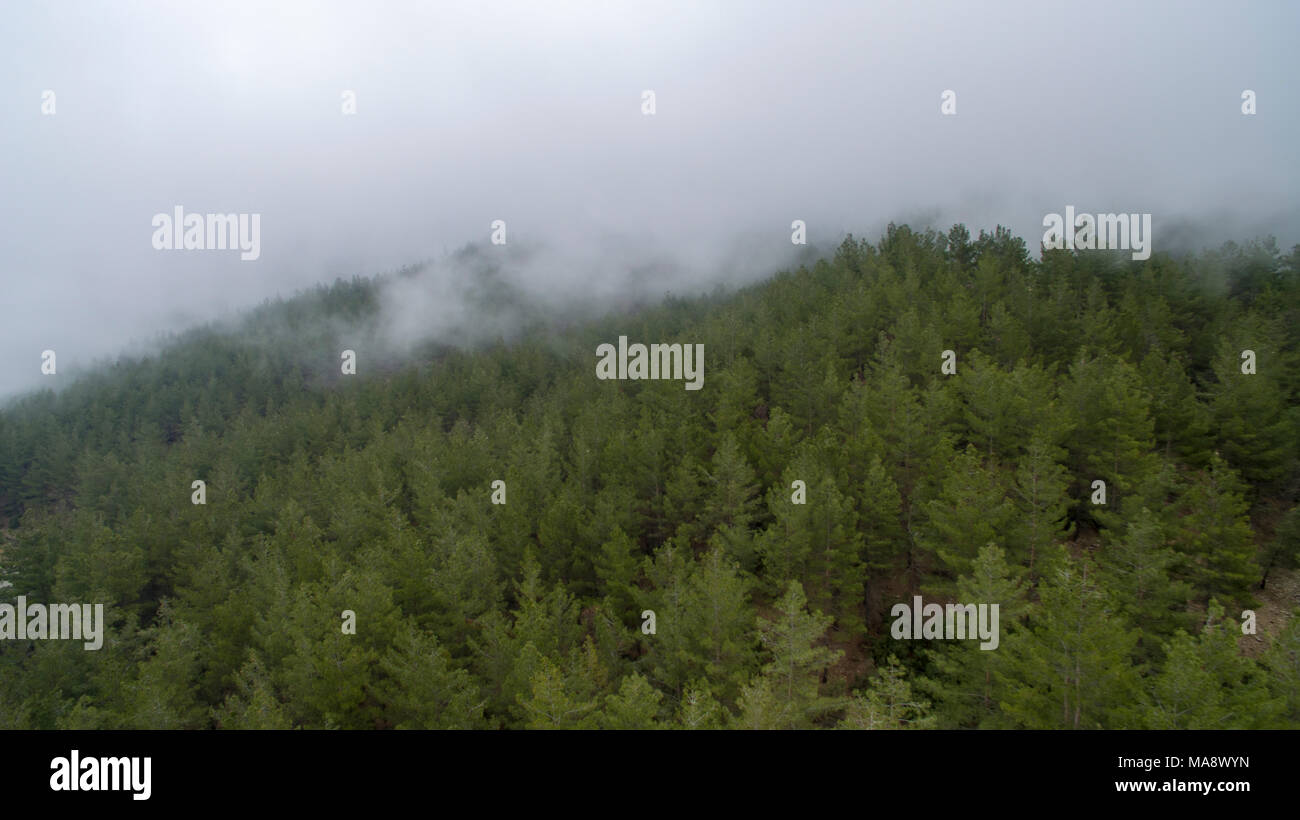 Aerial Shots: Fog Forest and Mountain - Stock Image