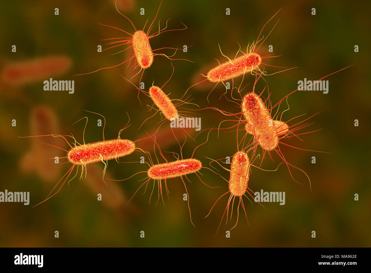 Fimbriae Stock Photos Images Alamy In This Illustration The Prokaryotic Cell Is Rod Shaped Circular Computer Of Escherichia Coli Bacteria E