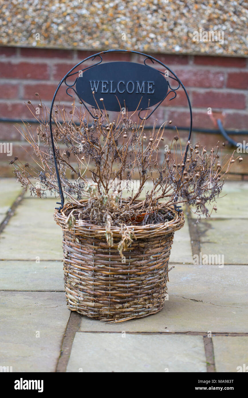 Dead plants in a basket with a sign saying 'Welcome' on top of stone paving with a brickwork background. - Stock Image