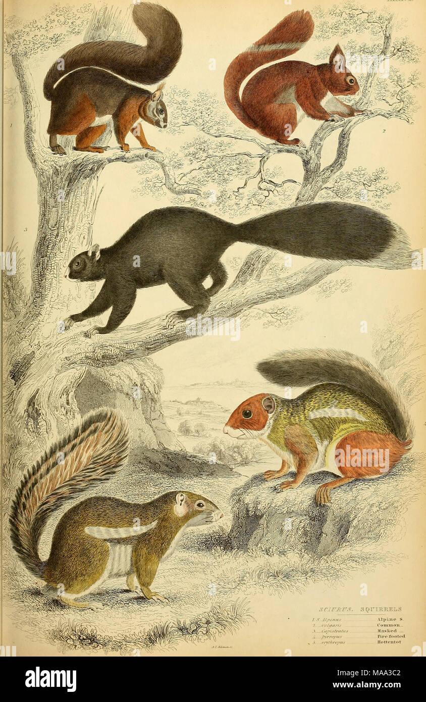 ". Edinburgh journal of natural history and of the physical sciences . L S A.lpinu.6 7 mtyarts .'>. .... < '.t/nsf/y/h/s /â¢I/â /â ""/â¢//s 5. .crv/hz-ofiis Alpine S. (""OHITIIOH.- M;islc(Ml - Fixe-rfooteci Hottentot - Stock Image"