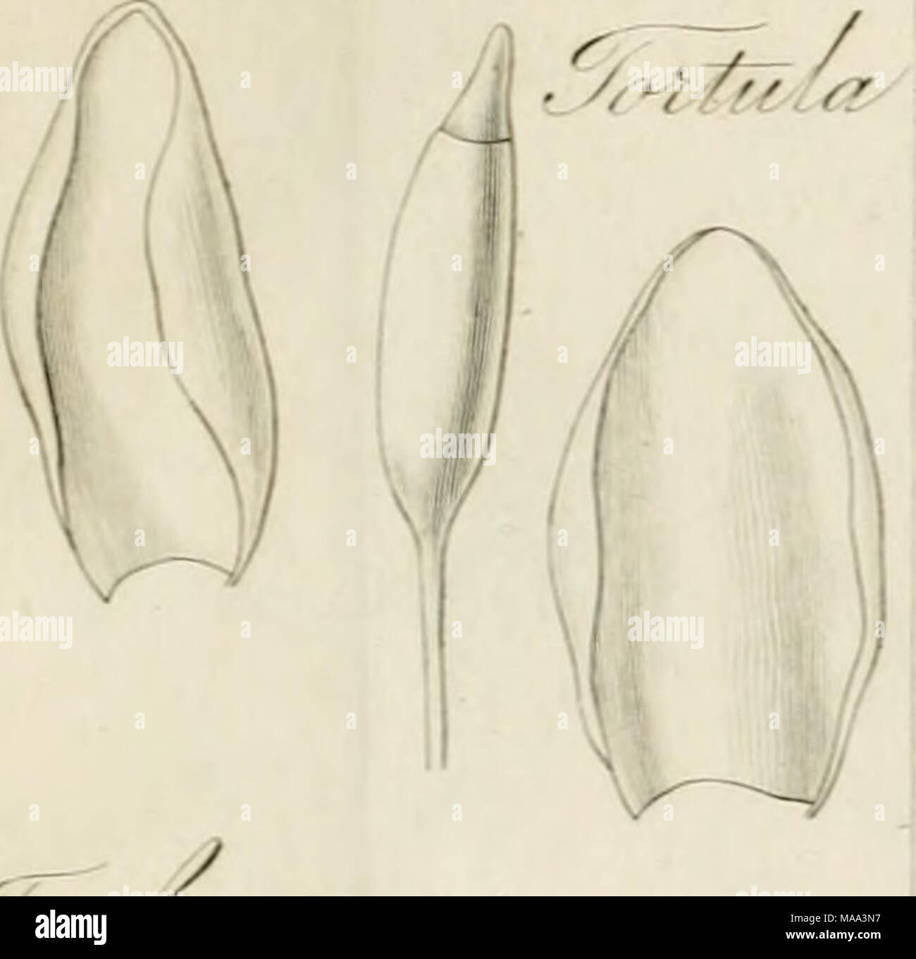 . The Edinburgh journal of science. v. 1-10, July 1824-Apr. 1829; new ser., v. 1-6, July 1829-Apr. 1832 . •lJ. ^Mnt^iMj^ Stock Photo
