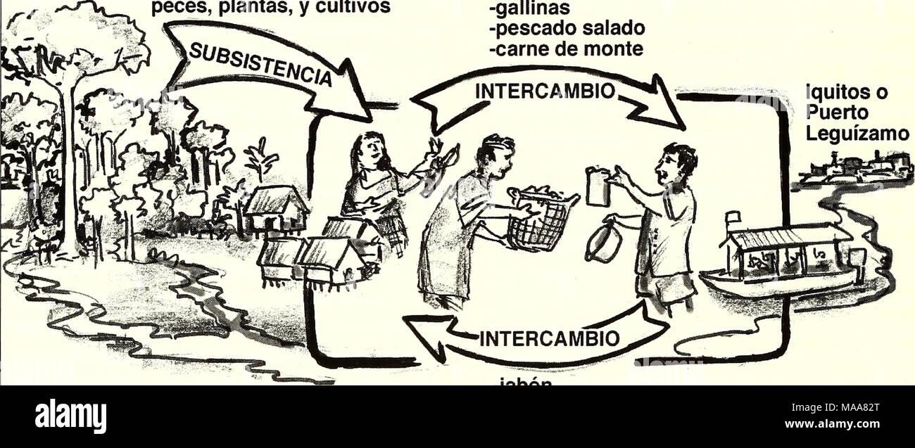 . Ecuador, Perú : Cuyabeno-Güeppí . -jabón -sal y azúcar -ropa -útiles escolares -herramientas -cartuchos varón. Es notorio el hecho que las mujeres disponen de informaciones detalladas de los lugares importantes para la pesca, caza, cultivos, uso de plantas medicinales y artesanía. Enlaces con la economía del mercado En términos generales, los pobladores en las áreas visitadas complementan su economía de subsistencia mediante la crianza de animales menores (principalmente aves de corral) y cerdos, ganadería a pequeña escala y por medio de cultivos de yuca, plátanos, arroz, maíz, etc. Con los  - Stock Image