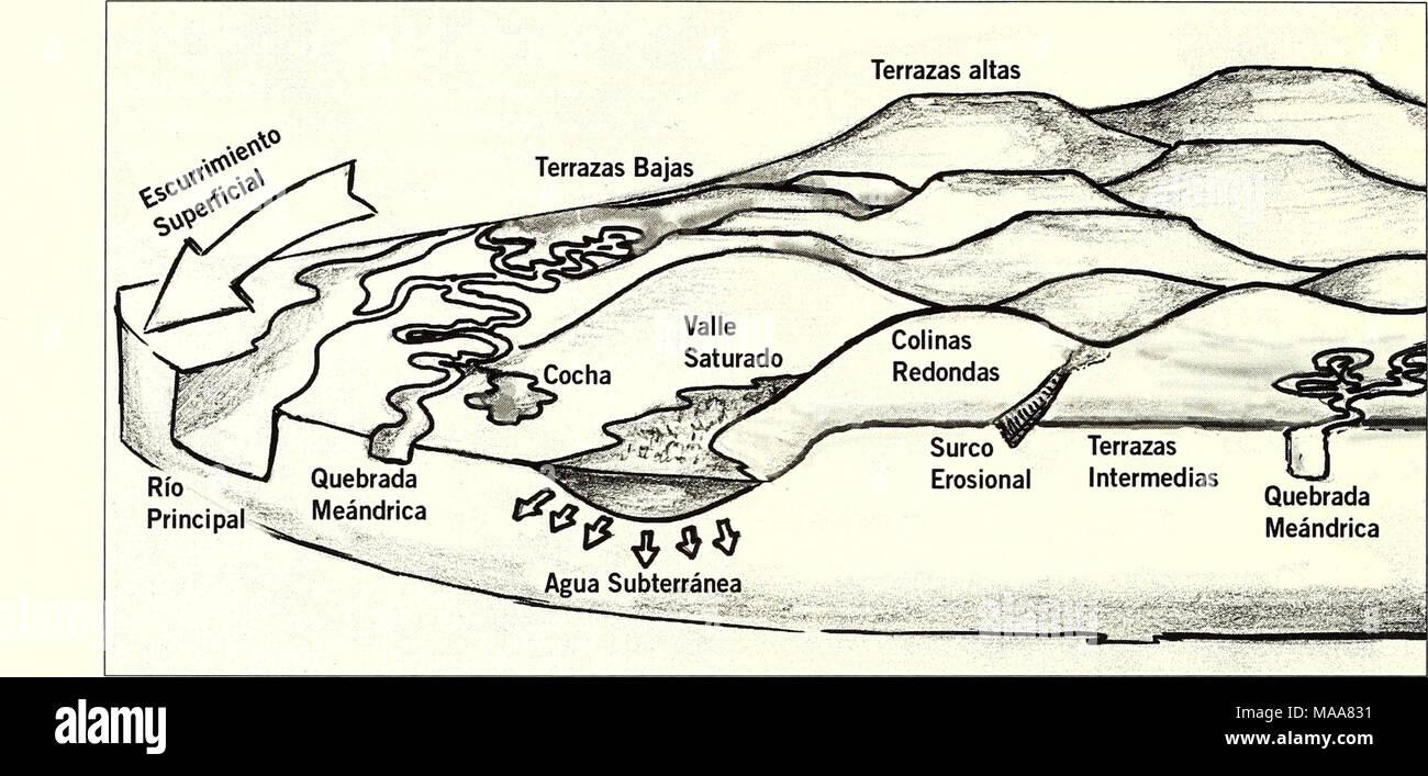 . Ecuador, Perú : Cuyabeno-Güeppí . marino-tardío y amazónico-temprano en entornos de lagos interiores (Wessenlingh et al. 2006b). Una serie de fallas locales y sus características asociadas de levantamiento se superponen con este paisaje extremadamente dinámico. Una notable característica de levantamiento está asociada con la formación del complejo de lagos de aguas negras y quebradas serpenteantes de Lagartococha. Esta falla corre de noreste a suroeste y su levantamiento jugó probablemente un rol clave en la formación del complejo lacustre de Lagartococha como se describe más adelante (Fig.  Stock Photo