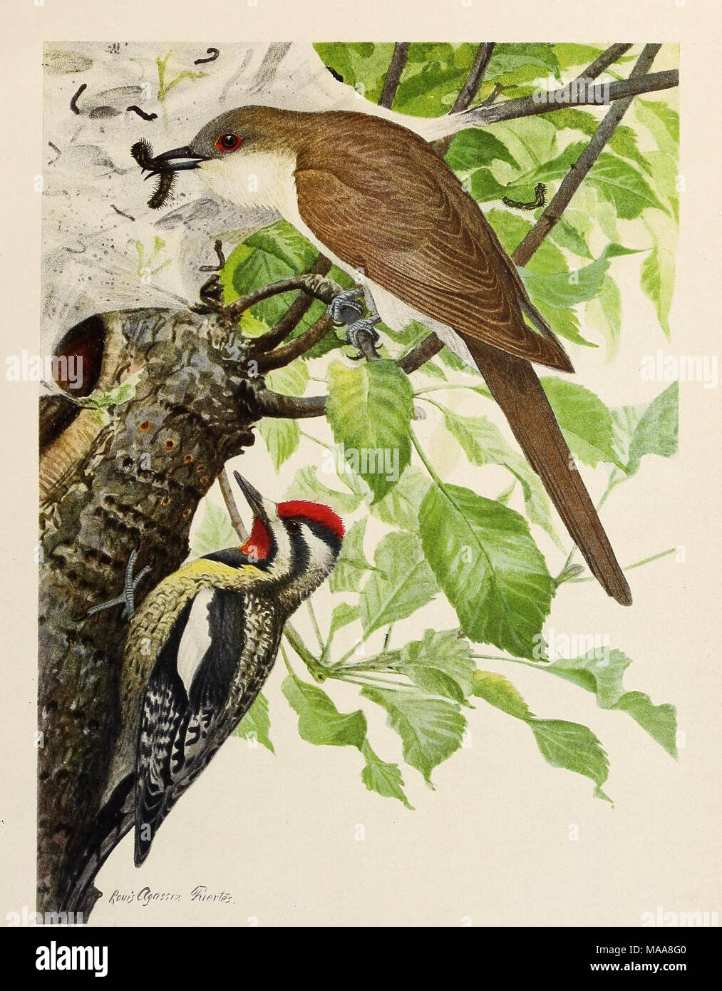 The Economic Value Of Birds To State Upper Figure BLACK