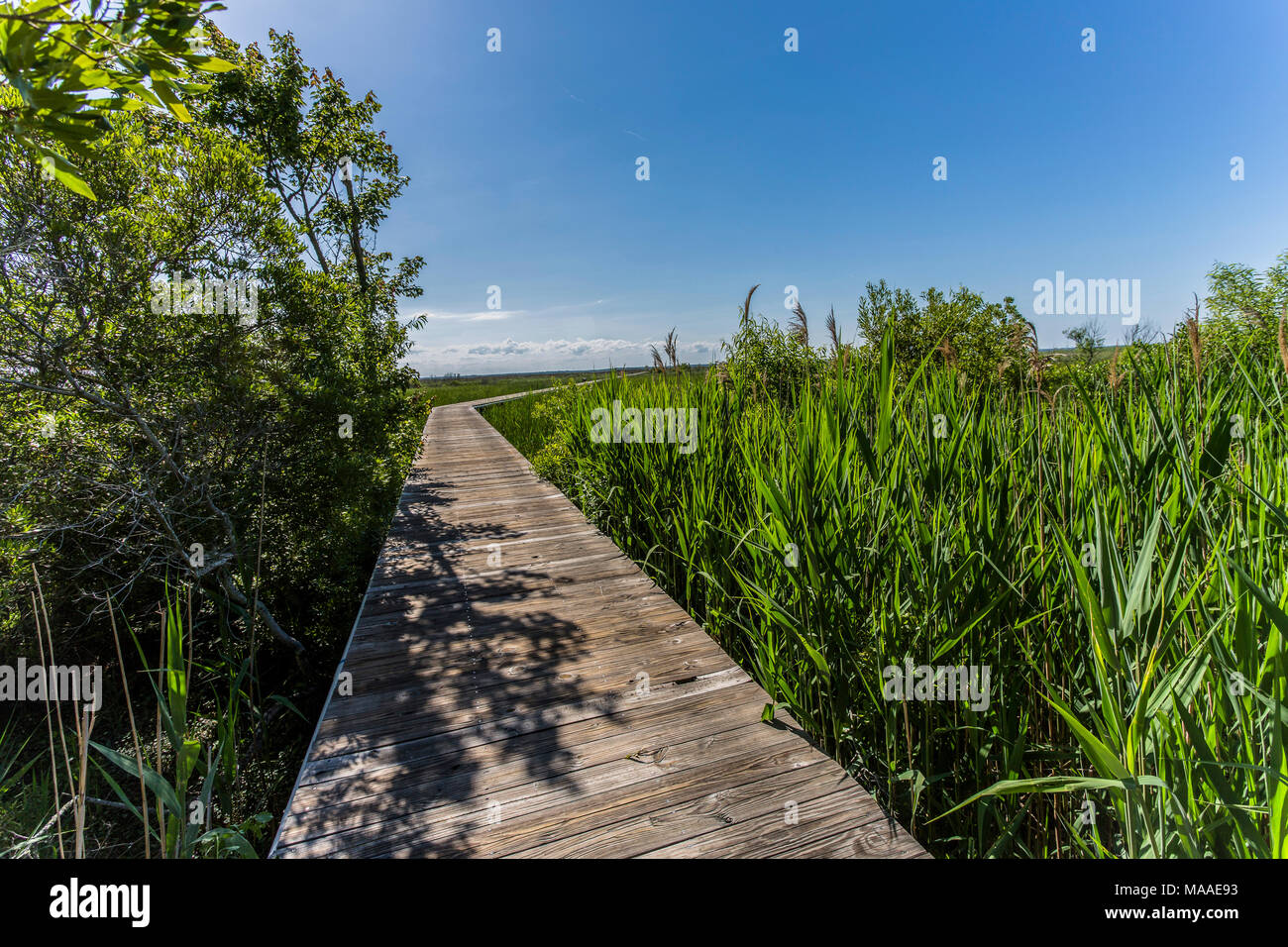 A coastal marshland vista frames a wooden boardwalk that bends and  reaches to a distant big blue sky horizon, Outer Banks, North Carolina. Stock Photo