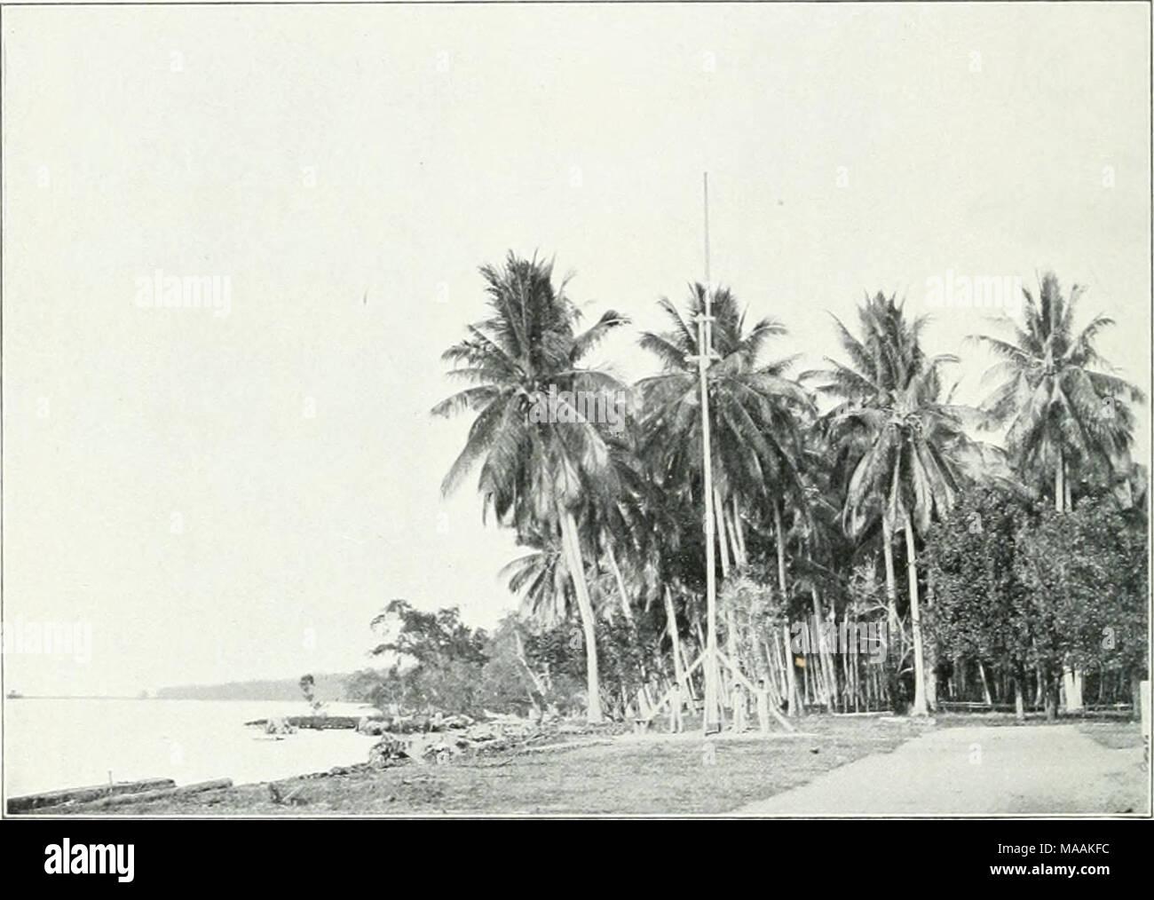 . Dr. K.W. van Gorkom's Oost-Indische cultures. Opnieuw uitg. onder redactie van H.C. Prinsen Geerligs. [Door J.P. van der Stock et al.] . Fig. 248. Klappcraanijlant op Talisse. ondernemingen met 22430 en 2469, samen 24899 bouws, waarvan 7217 in productie, gelegen voornamelijk in Sumatra's Oostkust, Atjeh, Riouw en Menado. Wat dit alles beteekent tegenover de inlandsche cultuur moge blijken uit het volgende. Stel dat op lederen bouw 70 voldragende palmen stonden, die ieder 60 noten per jaar leverden, terwijl uit 5000 noten i ton copra verkregen wordt, dan zou van deze 36000 bouws in geheel Ind - Stock Image