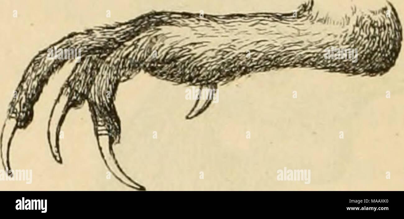 . Dyreriget : (Laerebog i zoologien, nr. 1) . gig. 174. ^otoeb 09 175. gob af en 9t^pe. of en nøgen 9?ing omfring Øiet. 'De beboe @tooe, 9}Zavfev og gjelbegne, fcvnemmelig i ben novblige ^attfugte, og ere @tanb* etler ©treiffugle, ber fun fitjtte en fort ©træfning for at føge rigeligere gøbe; ingen af bem ^otbe§ fom tamme. T)i ftefte leoe i 3)?onogami, og |)an og §un ^aoe ba begge en brunfpettet i^jer* bragt; nogle teoe bog i ^otljgami. |)annen ^ar fnn fjelben ©porer og albrig be anbre ^r^belfer, fom ubmcerfe bette tjøn i ben foregaaenbe i5aa Ur^anerneé Sege* ptabfe. 3) ^ierpen (T. Bonasia) ^r - Stock Image