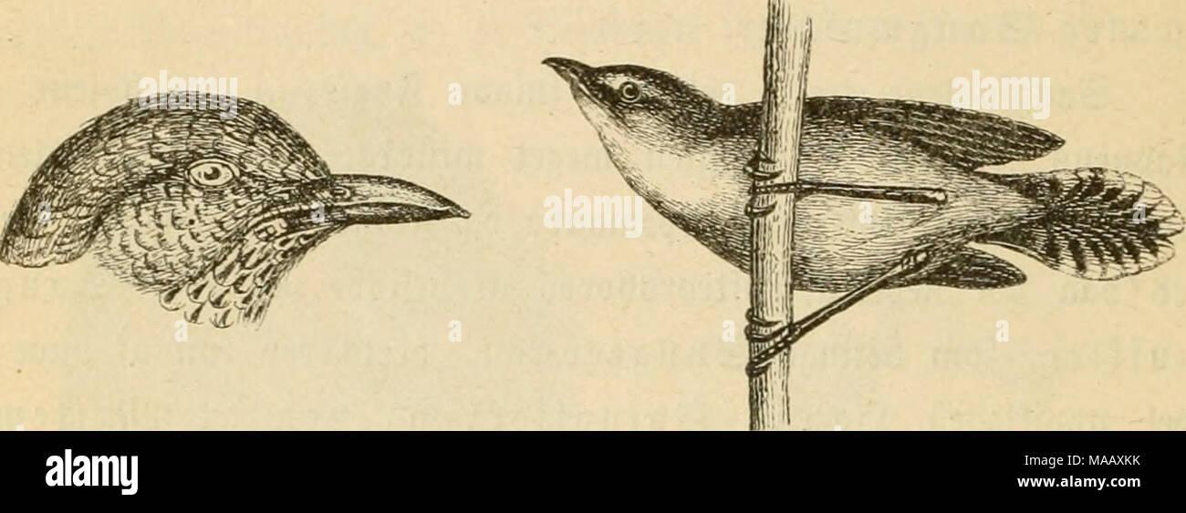 Dyreriget Laerebog I Zoologien Nr 1 Gig 153 Cooeb Af 2