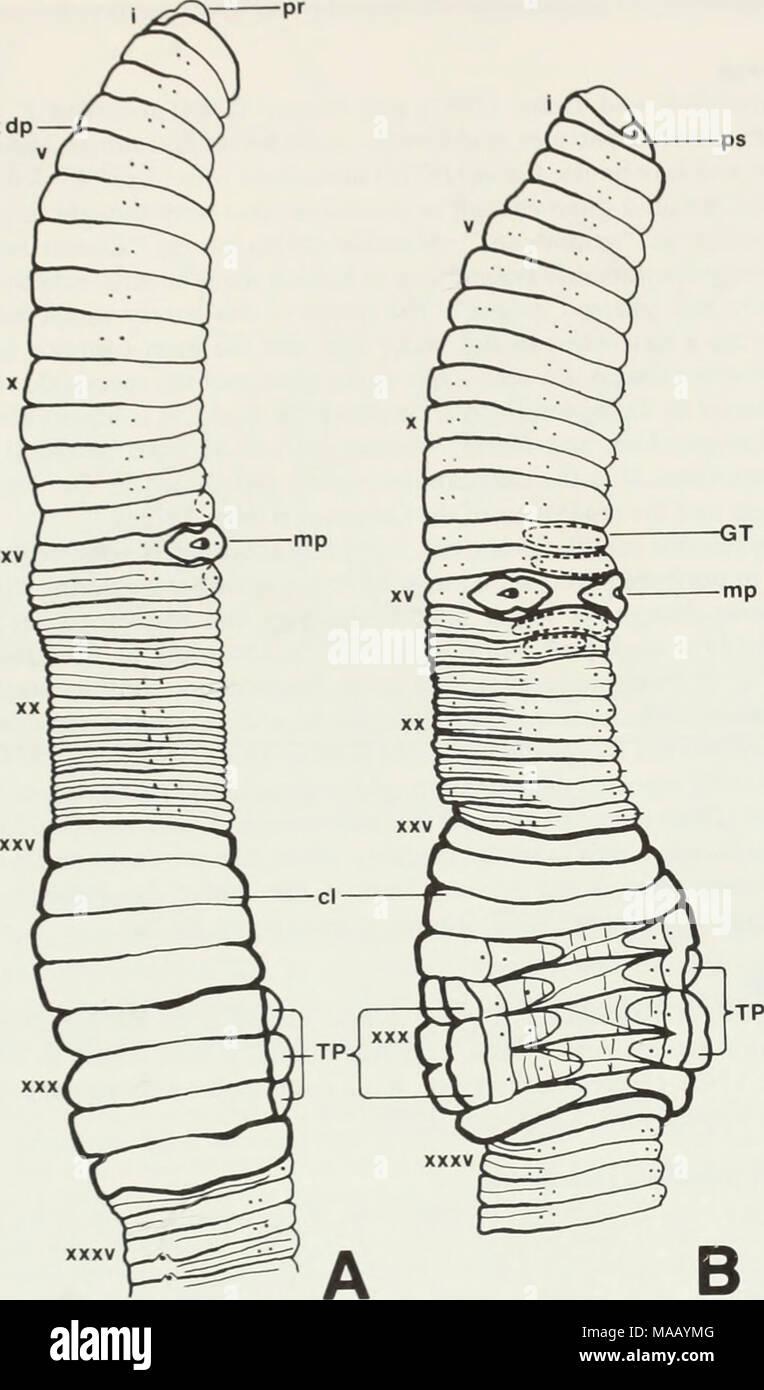 External Anatomy Of The Earthworm Image collections - human body anatomy