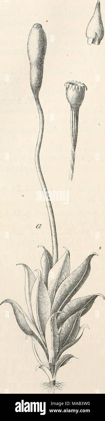 . Dr. L. Rabenhorst's Kryptogamen-Flora von Deutschland, Oesterreich und der Schweiz . Stock Photo