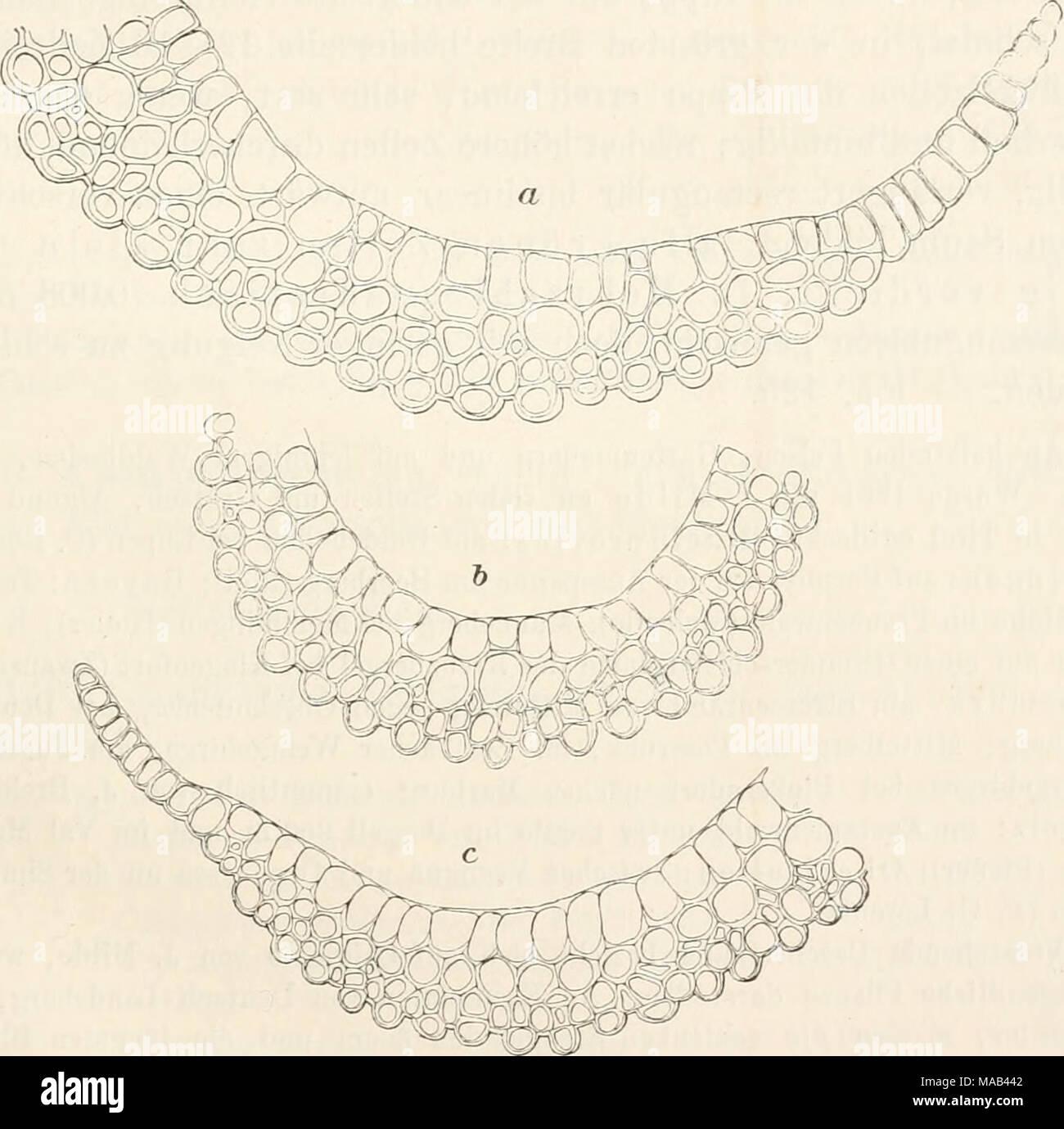 . Dr. L. Rabenhorst's Kryptogamen-Flora von Deutschland, Oesterreich und der Schweiz . Campylopus subulatus (Schimp.). Blattquerschnitte i-ii. a Original Milde: b und c Exemplar von Deutsch-Landsberg. *) Auch Wulfsberg, der 1. c. das jugendliche Sporogon (Seta recta, dimidium poUicis longa. Calyptra fimbriata) beschreibt, lässt die Blüthenverhältnisse un- erörtert. Die (J Blüthen in Milde's erster Beschreibung gehörten zu Dicranella decipiens Milde, Hedwigia 1865, p. 32. Li in i> rieht, Laubmoose. 25 - Stock Image