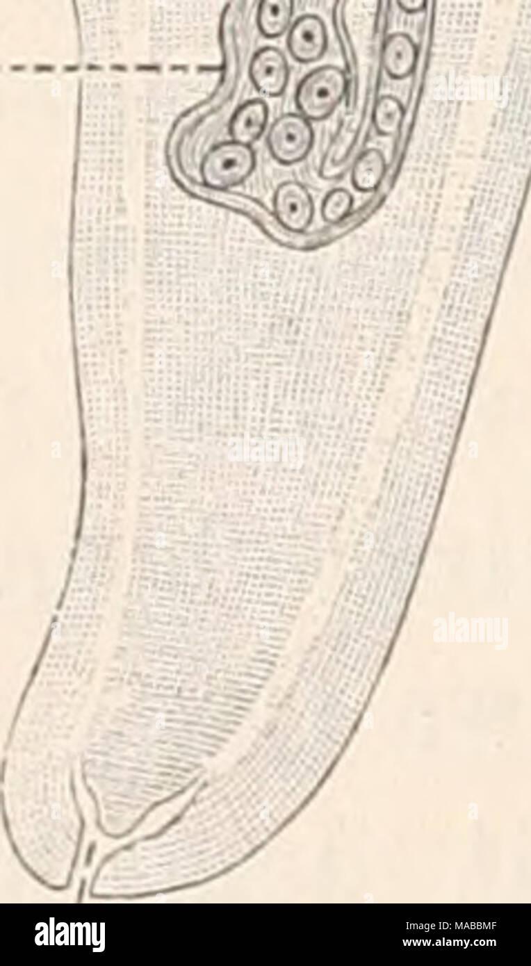 dd98b42154dc2 Dr. H.G. Bronn s Klassen und Ordnungen des Thier-Reichs   wissenschaftlich  dargestellt in .