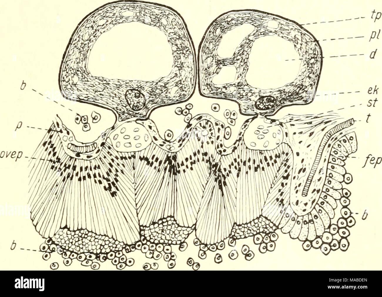 Beste Bild Von Ovar Galerie - Menschliche Anatomie Bilder ...