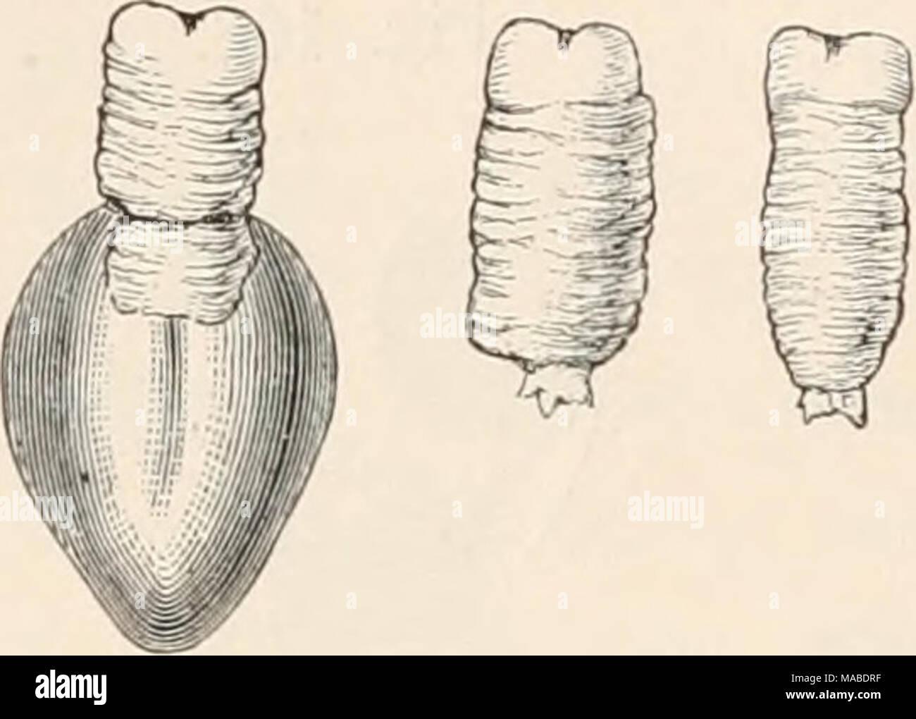 Wunderbar Anatomie Und Physiologie Online Klasse Fotos - Menschliche ...