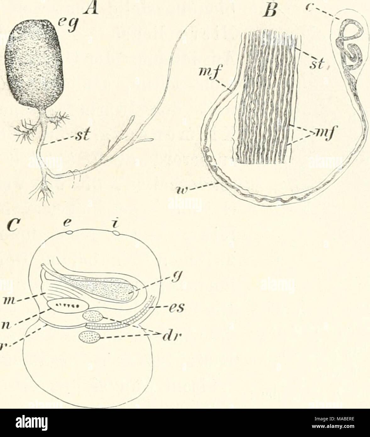 Großartig Magen Diagramm Anatomie Ideen - Menschliche Anatomie ...