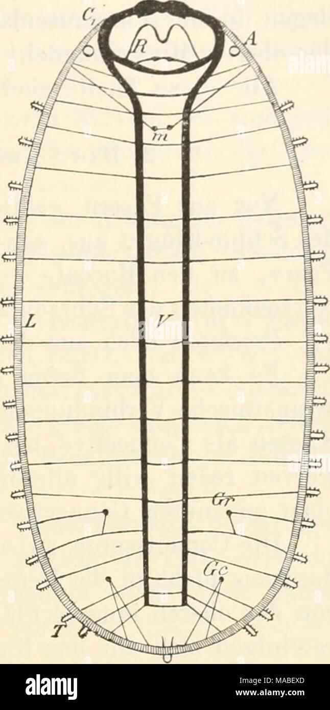Niedlich Weibliche Fortpflanzungssystem Diagramm Fotos - Anatomie ...