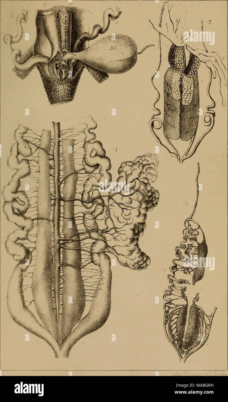 . Dr. H. G. Bronn's Klassen und Ordnungen der Amphibien wissenschaftlich dargestellt in Wort und Bild . Stock Photo