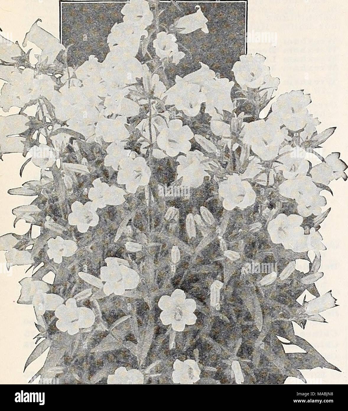 Dreers wholesale price list for florists special spring edition dreers wholesale price list for florists special spring edition canterbury bella arabia mightylinksfo