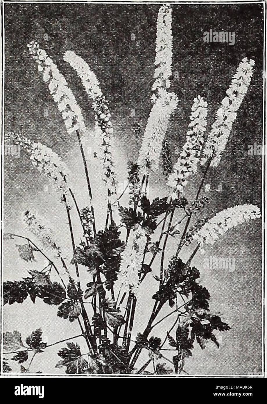 Dreers Wholesale Price List For Florists Bulbs Flower Seeds Lawn