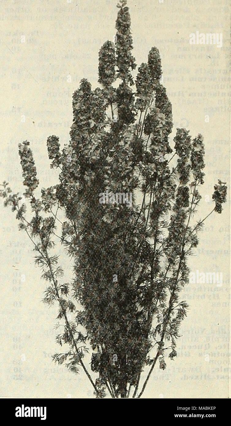 Linaria Seeds Stock Photos & Linaria Seeds Stock Images - Alamy