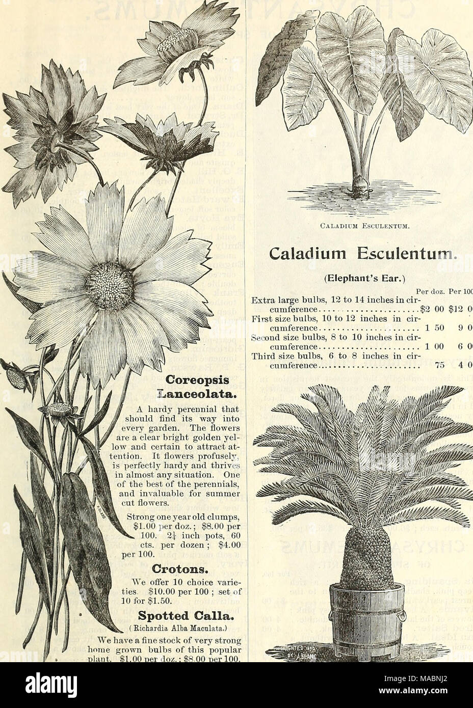 Dreers quarterly wholesale price list of seeds plants c winter dreers quarterly wholesale price list of seeds plants c winter edition january 1895 march coreopsis lanceolata a hardy perennial that should find mightylinksfo