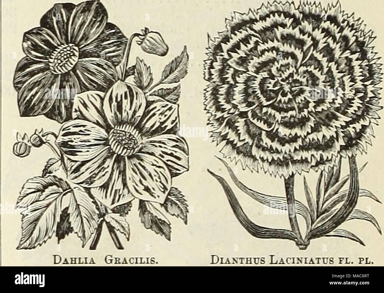 . Dreer's quarterly wholesale list for florists and market gardeners . - Stock Image