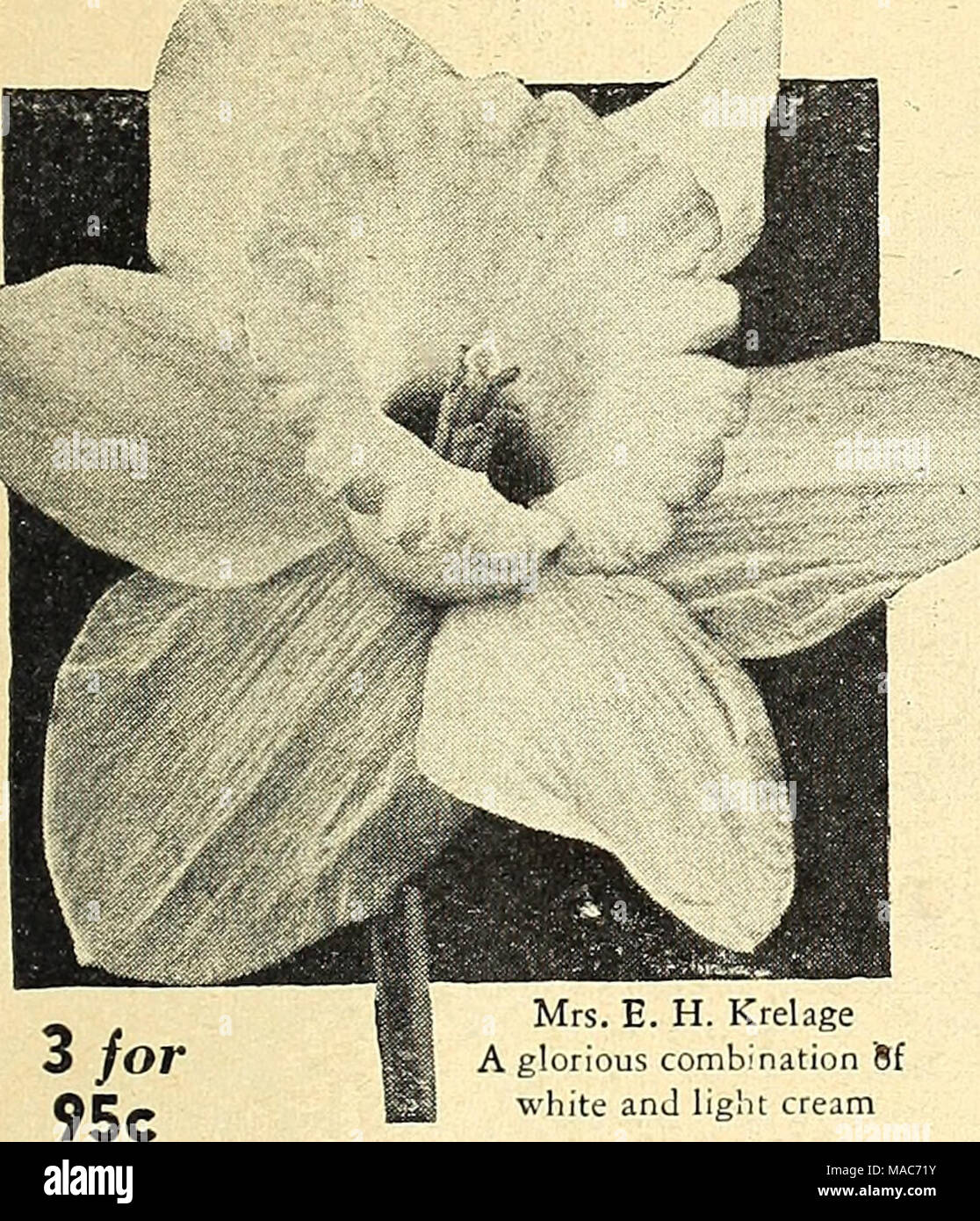 Dreers Planting Guide Autumn 1944 A Glorious Combination Sf White