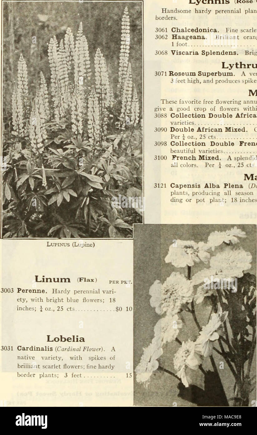 Dreers mid summer list 1925 lupinus lupine linum fiaxi perpkti dreers mid summer list 1925 lupinus lupine linum fiaxi perpkti 3003 perenne hardy perennial vari ety with bright blue flowers 18 inches oz mightylinksfo