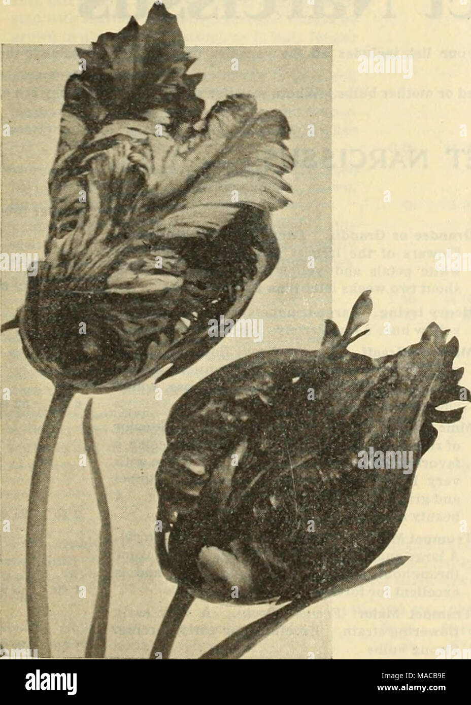 Cheap price of flowers stock photos cheap price of flowers stock dreers wholesale price list bulbs for florists plants for florists flower seeds for florists izmirmasajfo