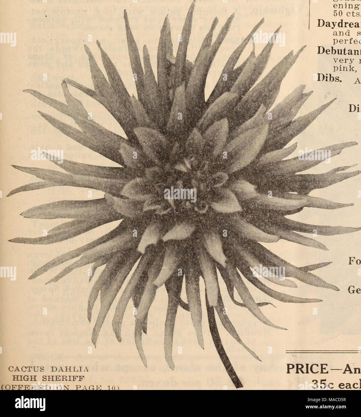 Dreers Wholesale Price List Henry A Dreer Cactus Dahlia High