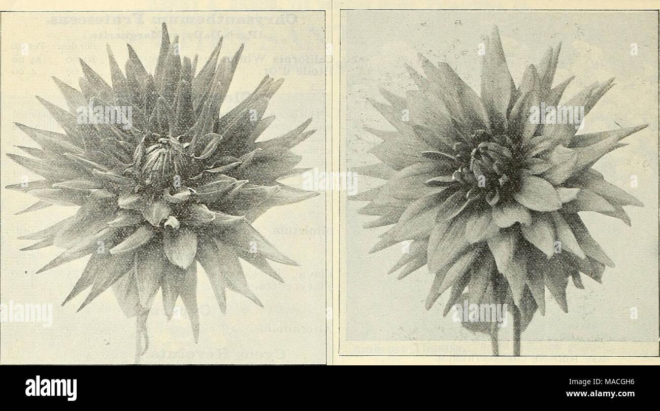 Dreers Wholesale Price List For 1902 Flower Seeds Bulbs Aquatics
