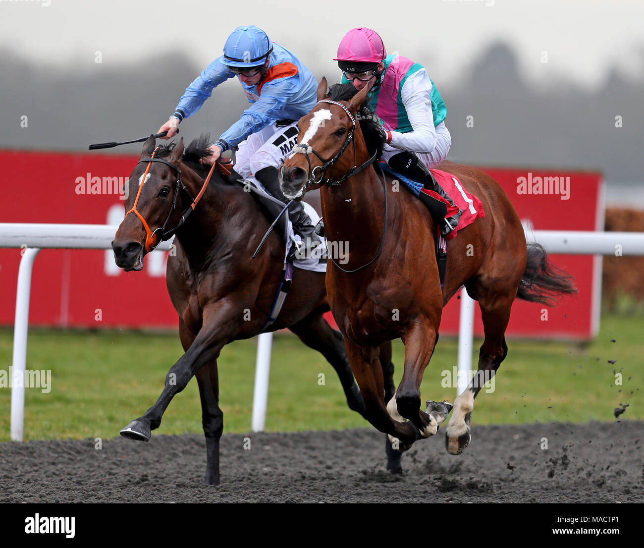 Crossed baton ridden by robert havlin wins ahead of the matchbook havlin wins ahead of the matchbook betting exchange ebf novice stakes tigre du terre ridden by tom marquand during the easter family fun day at kempton negle Images