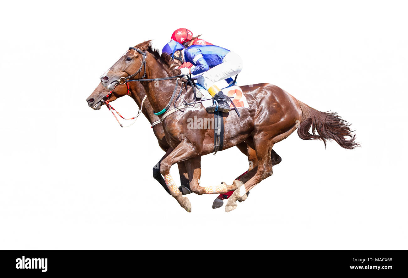 Two Jokey on a thoroughbred horse in blue closes runs isolated on white background - Stock Image