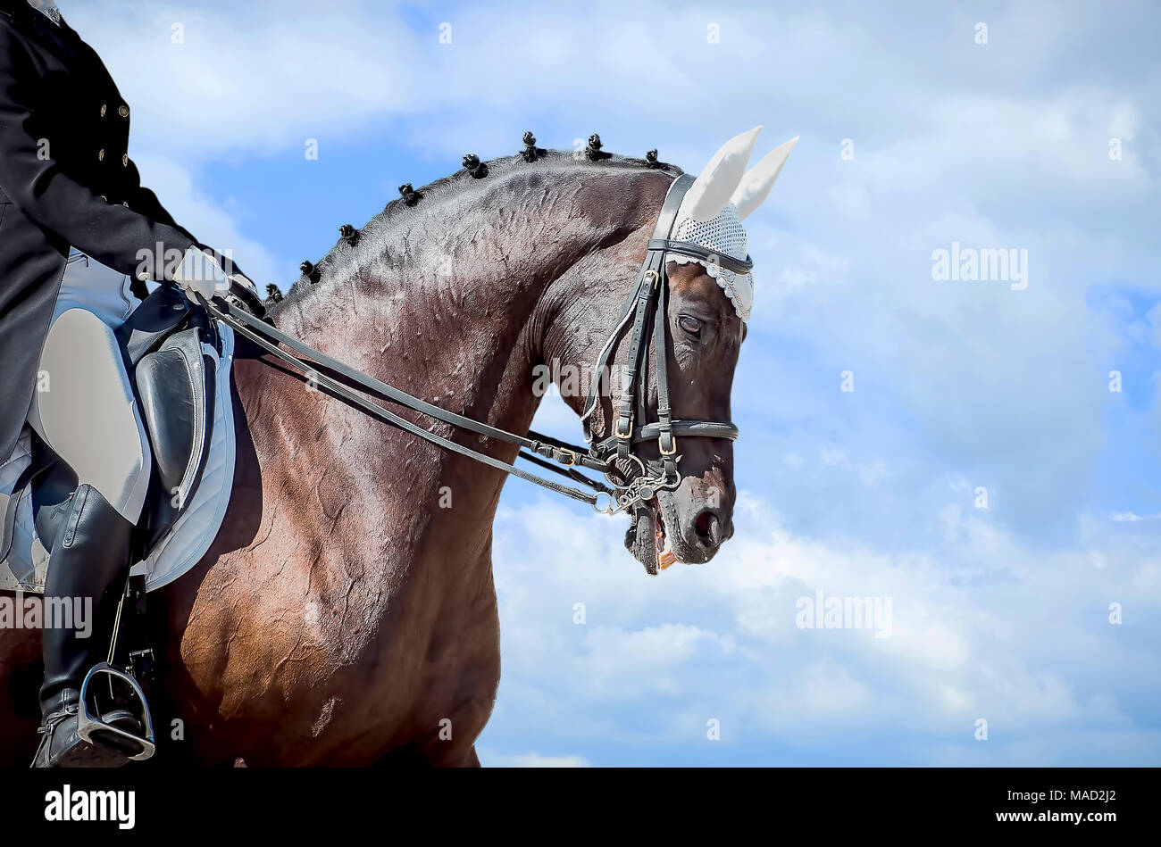 Equestrian sport - dressage head of sorrel horse on sky nature background Stock Photo