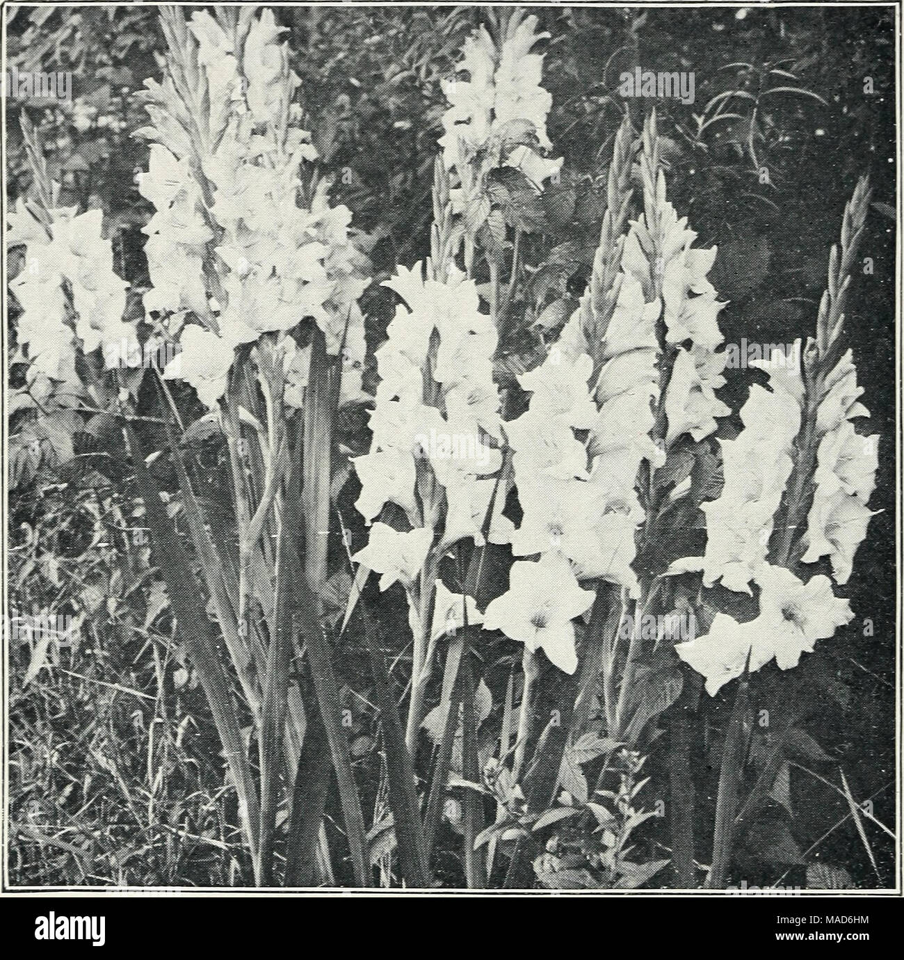 Garden Of Hundred Flowers Stock Photos Garden Of Hundred Flowers