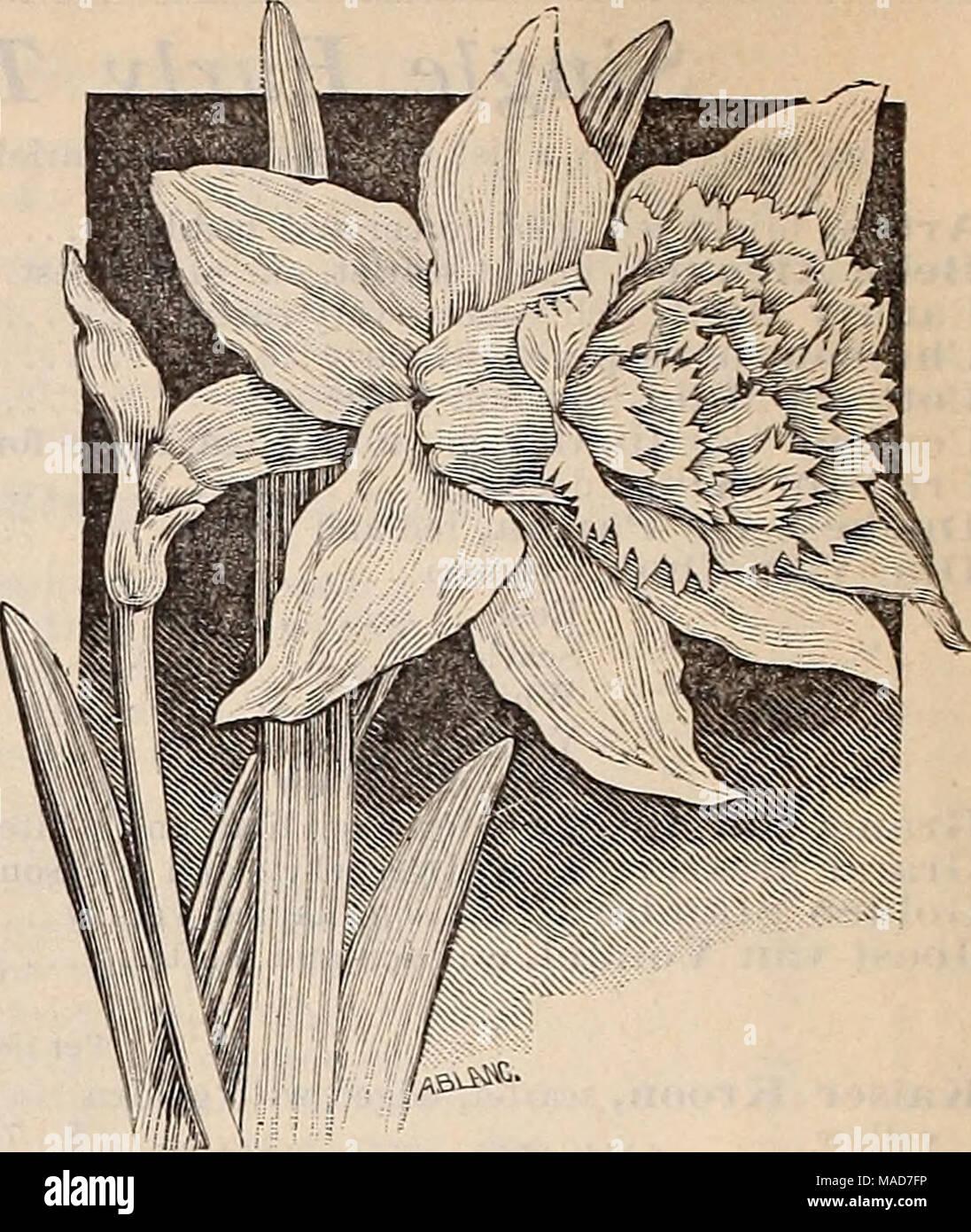 Dreers Quarterly Wholesale Price List Of Spring Flowering Bulbs