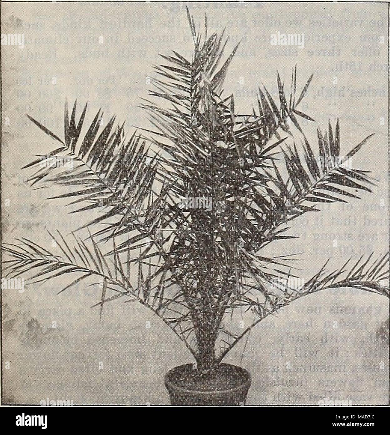 . Dreer's quarterly wholesale price list of seeds plants bulbs &c. tools fertilizers sundries &c . - Stock Image